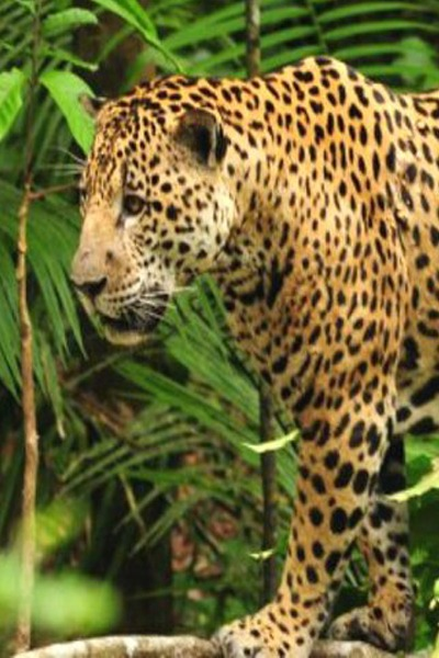 Tours: Tambopata Reserve & Sandoval Lake Adventure 3D/2N