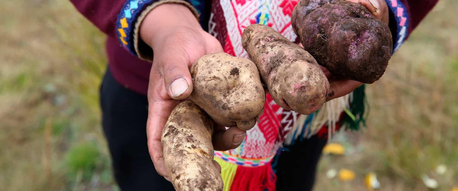Tours: Potato Park, Experiential Tour in Cusco 1 Day